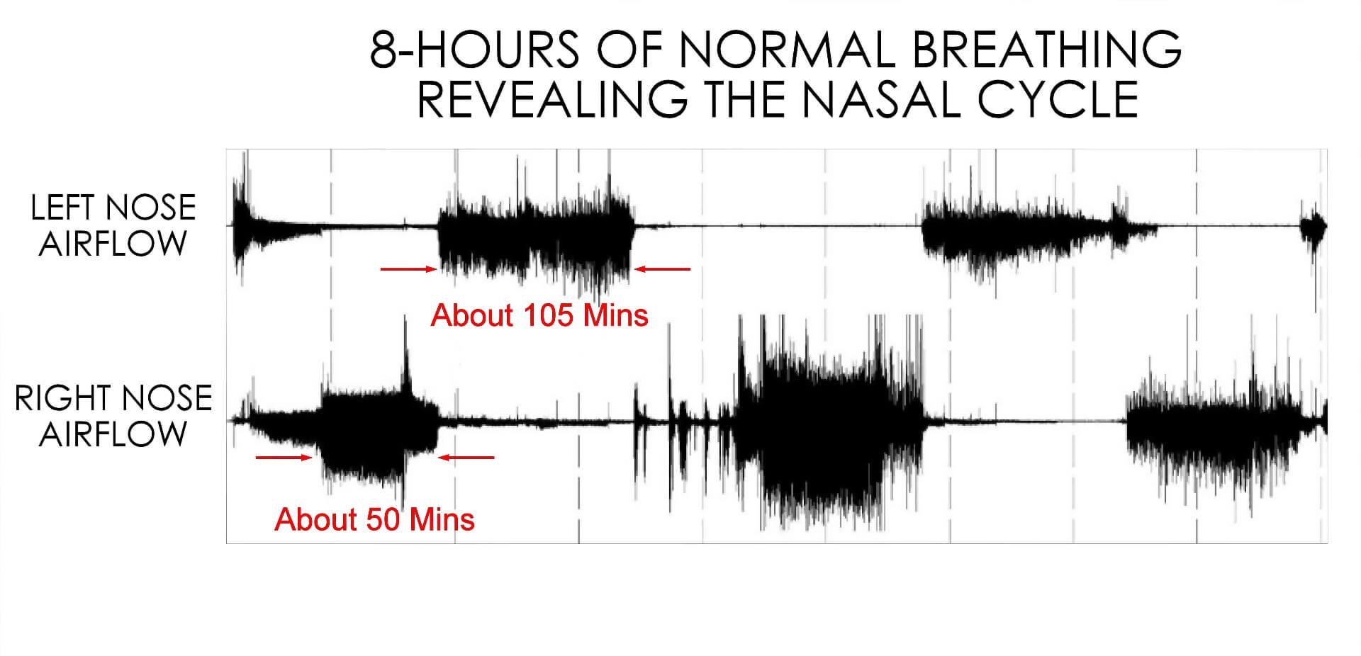 8 hour breathing cycle