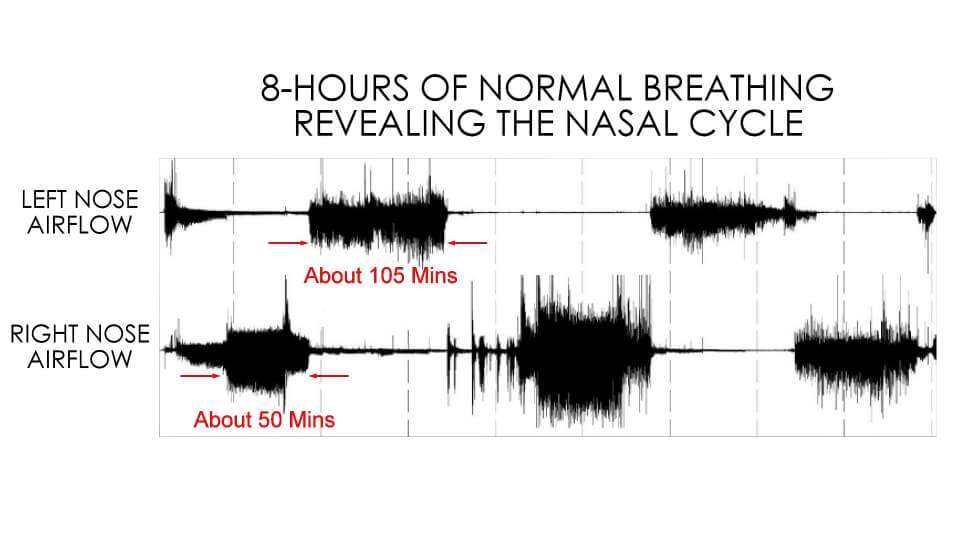 Patient 8 hour nasal cycle